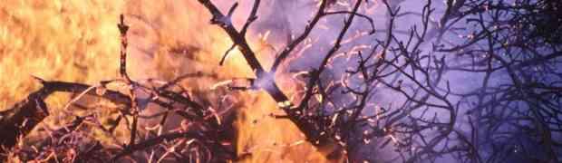 Waldbrandgefahr - Verordnung