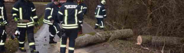 Sturmschaden - Baum über Strasse